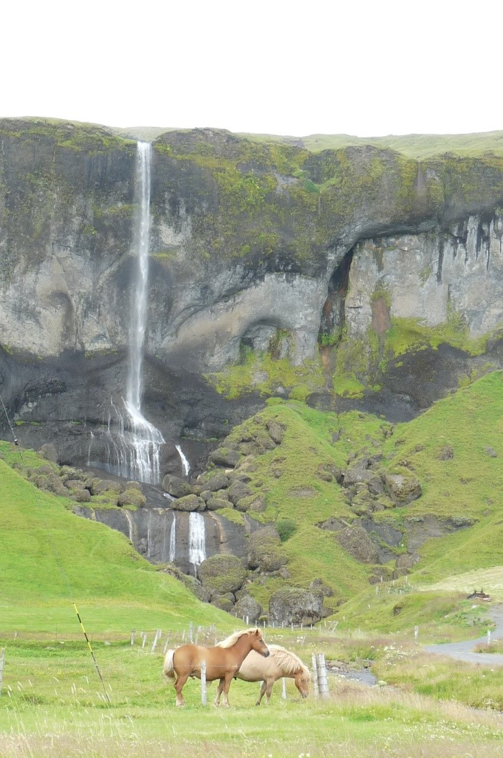 "A ""typical"" waterfall in the background, with the famous Icelandic horses for scale"