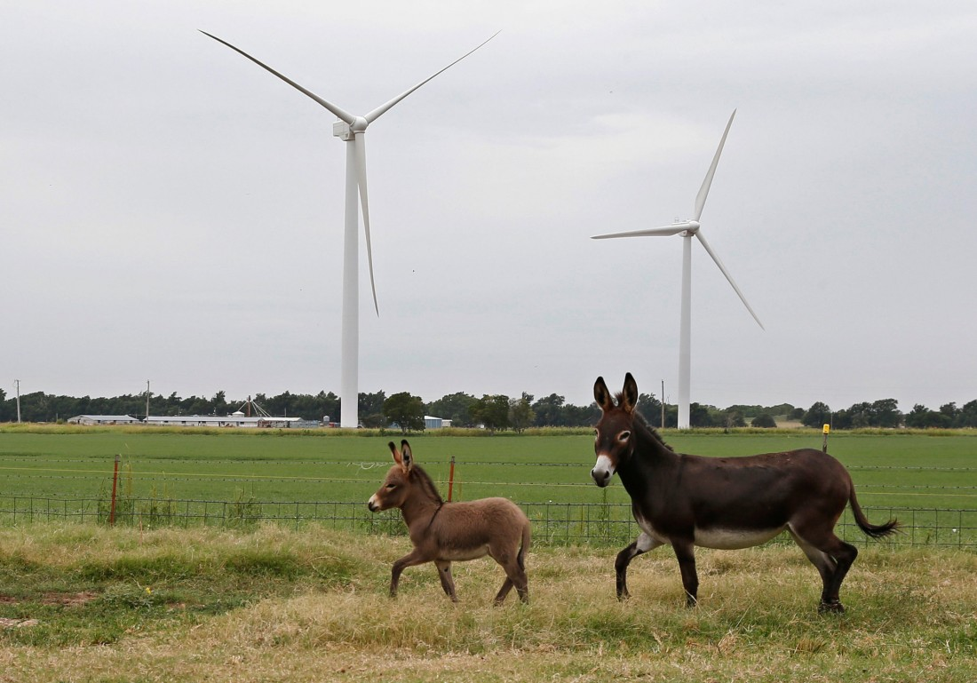 Wind Turbines and Donkeys