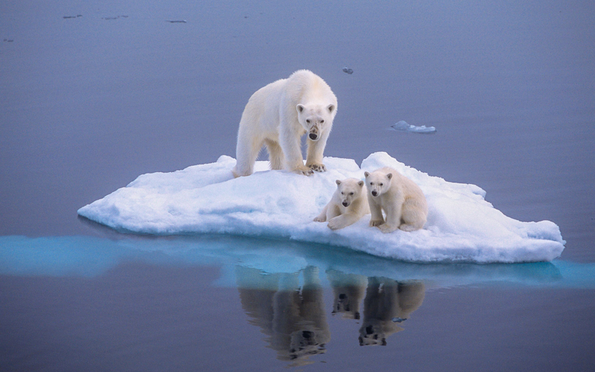 polar bears, renewables, Arctic, sea ice, climate change